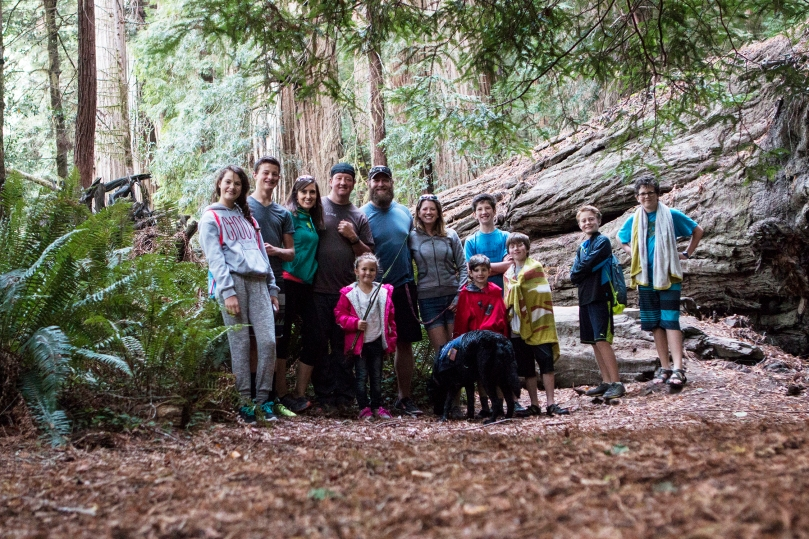 redwoods11