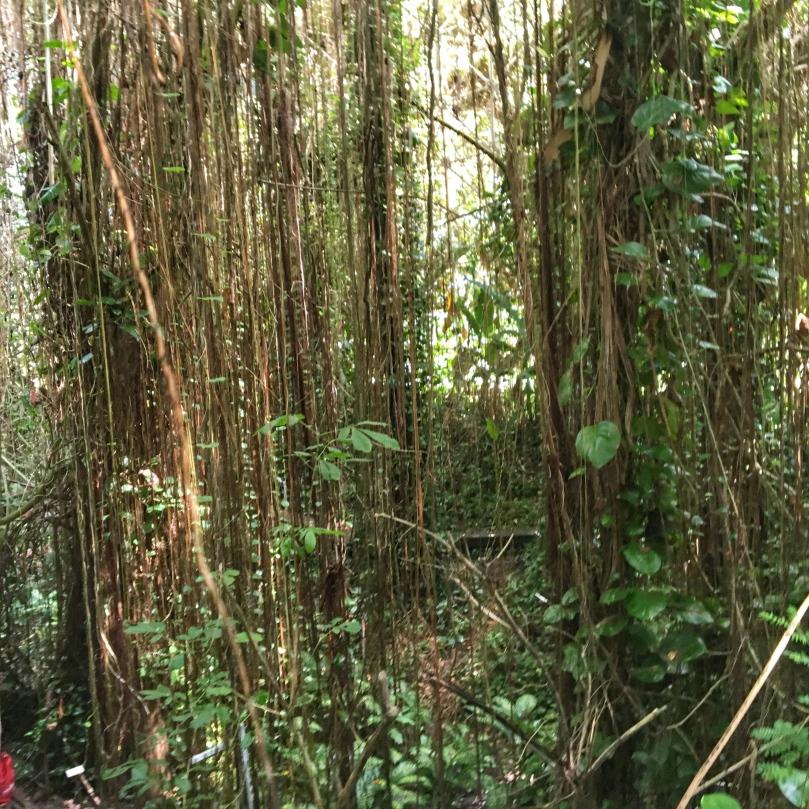 biosphere jungle.jpg