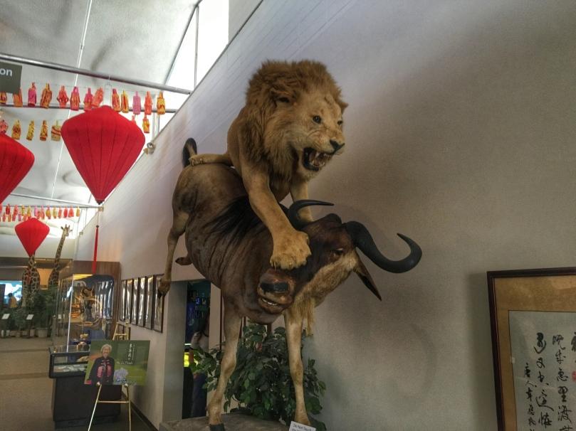 museum lion.jpg