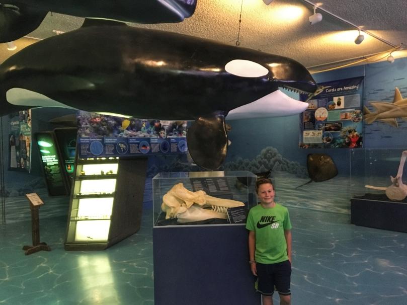 museum whale.jpg
