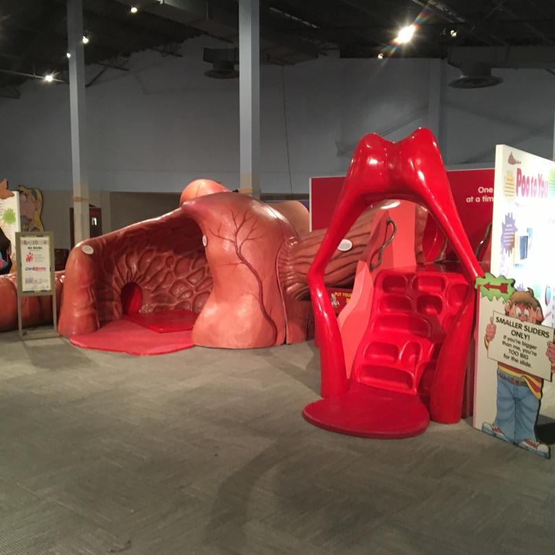 dh digestive system.jpg