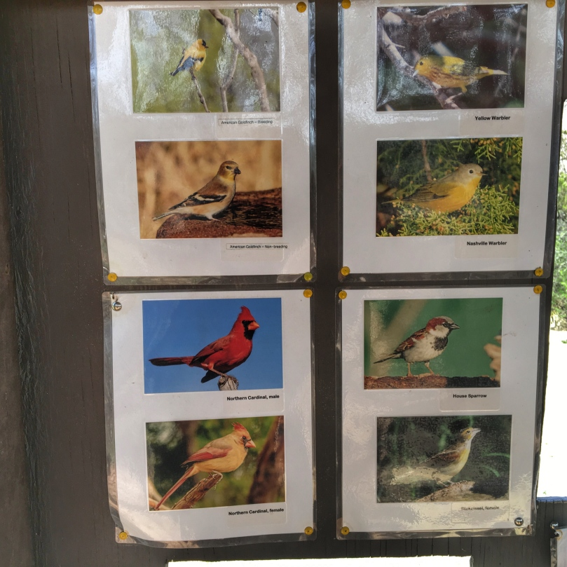 pd birds.jpg